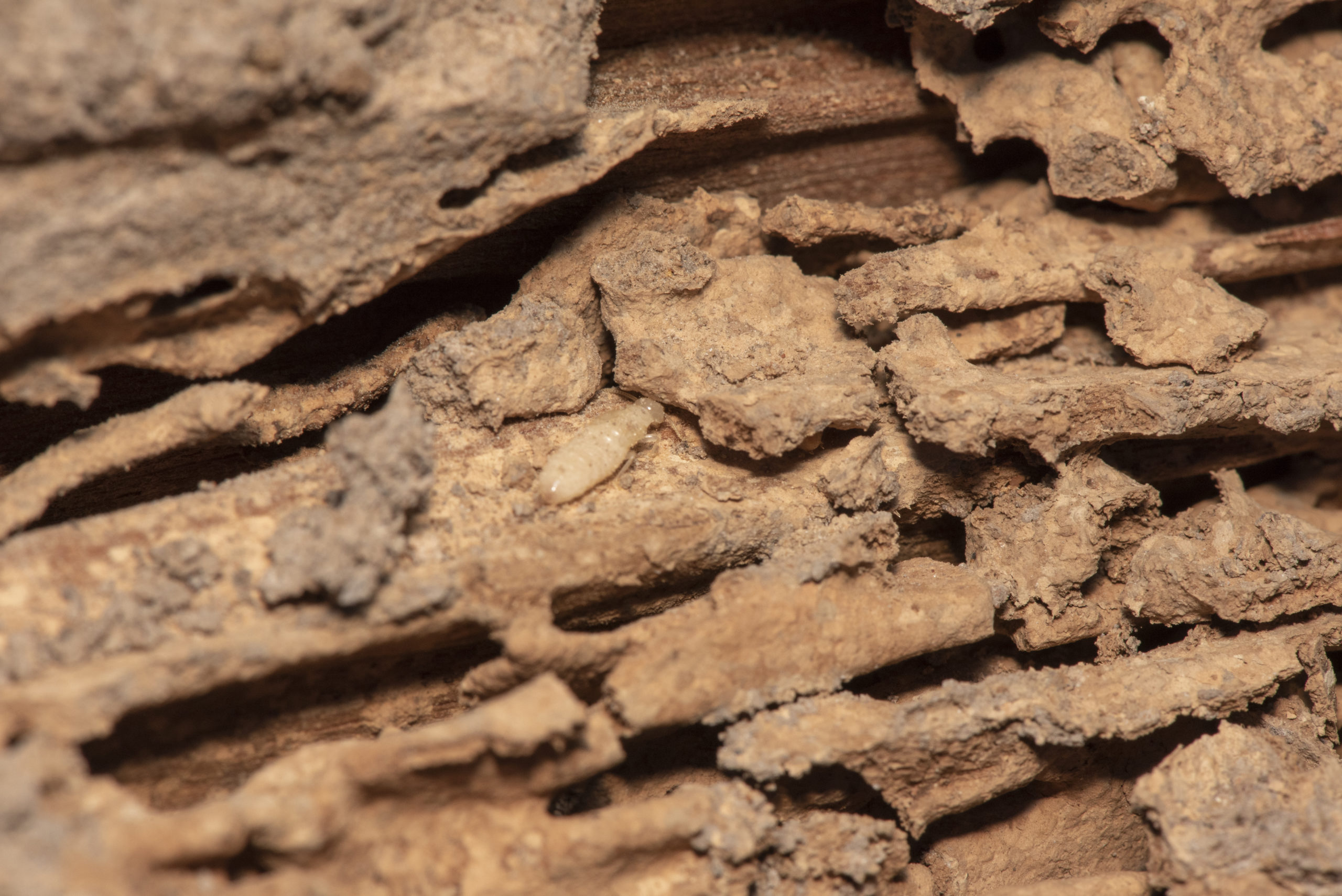 Traces of termites eat wood,animals that destroy wood.